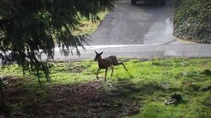 deer feb 2014